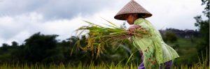 ZWO houdt online regioavonden voor Indonesië