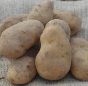 Aardappelactie voor Delta voor Indonesië